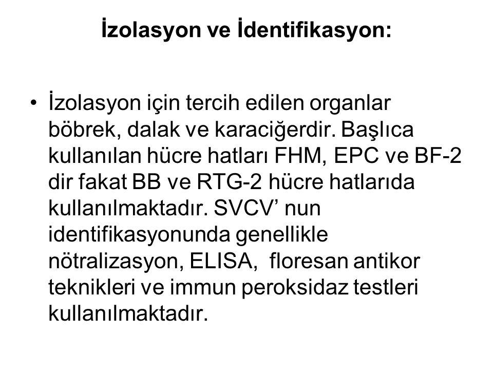 İzolasyon ve İdentifikasyon: