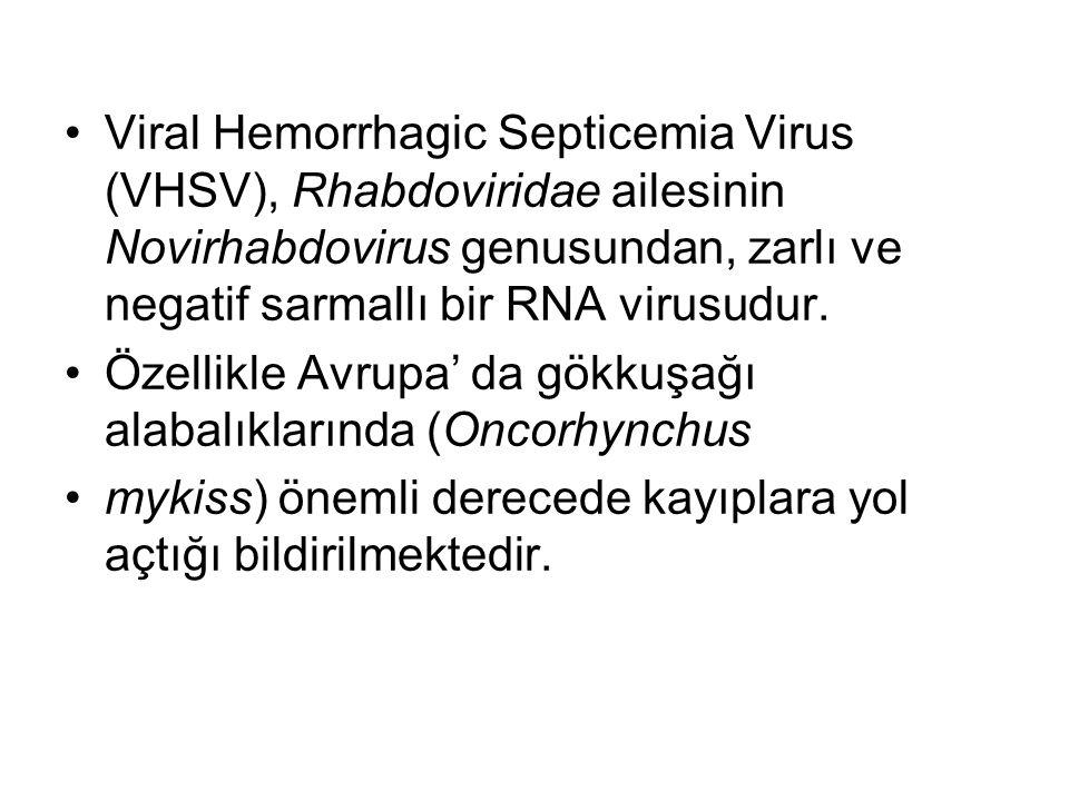 Viral Hemorrhagic Septicemia Virus (VHSV), Rhabdoviridae ailesinin Novirhabdovirus genusundan, zarlı ve negatif sarmallı bir RNA virusudur.