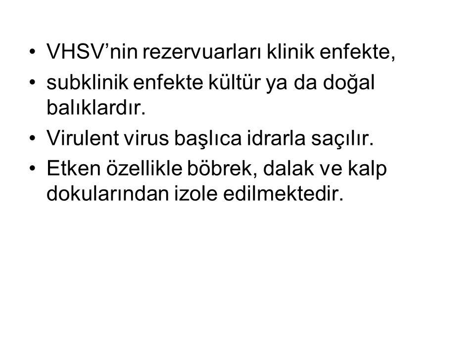 VHSV'nin rezervuarları klinik enfekte,