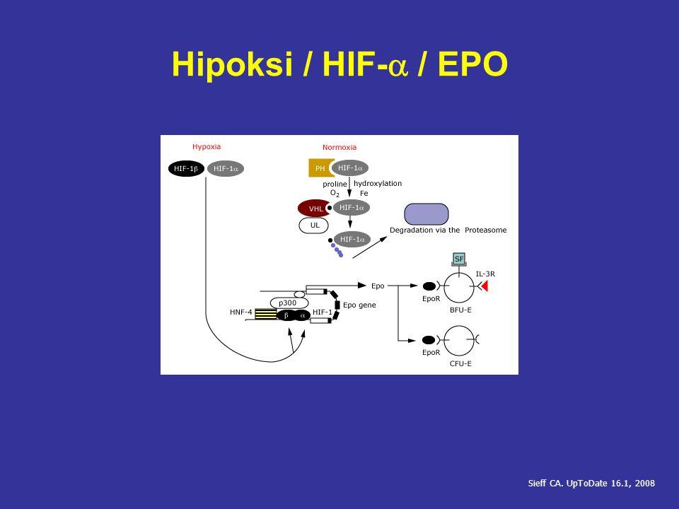 Hipoksi / HIF-a / EPO Sieff CA. UpToDate 16.1, 2008