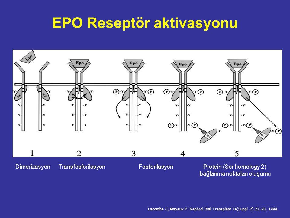 EPO Reseptör aktivasyonu