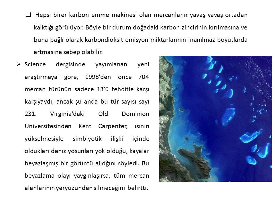 Hepsi birer karbon emme makinesi olan mercanların yavaş yavaş ortadan kalktığı görülüyor. Böyle bir durum doğadaki karbon zincirinin kırılmasına ve buna bağlı olarak karbondioksit emisyon miktarlarının inanılmaz boyutlarda artmasına sebep olabilir.