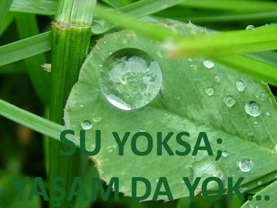 SU YOKSA; YAŞAM DA YOK…