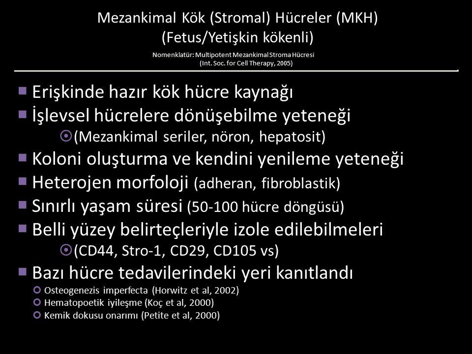 Mezankimal Kök (Stromal) Hücreler (MKH) (Fetus/Yetişkin kökenli)