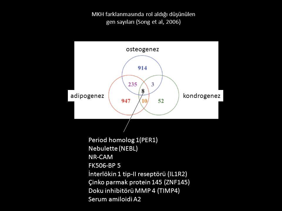 İnterlökin 1 tip-II reseptörü (IL1R2)