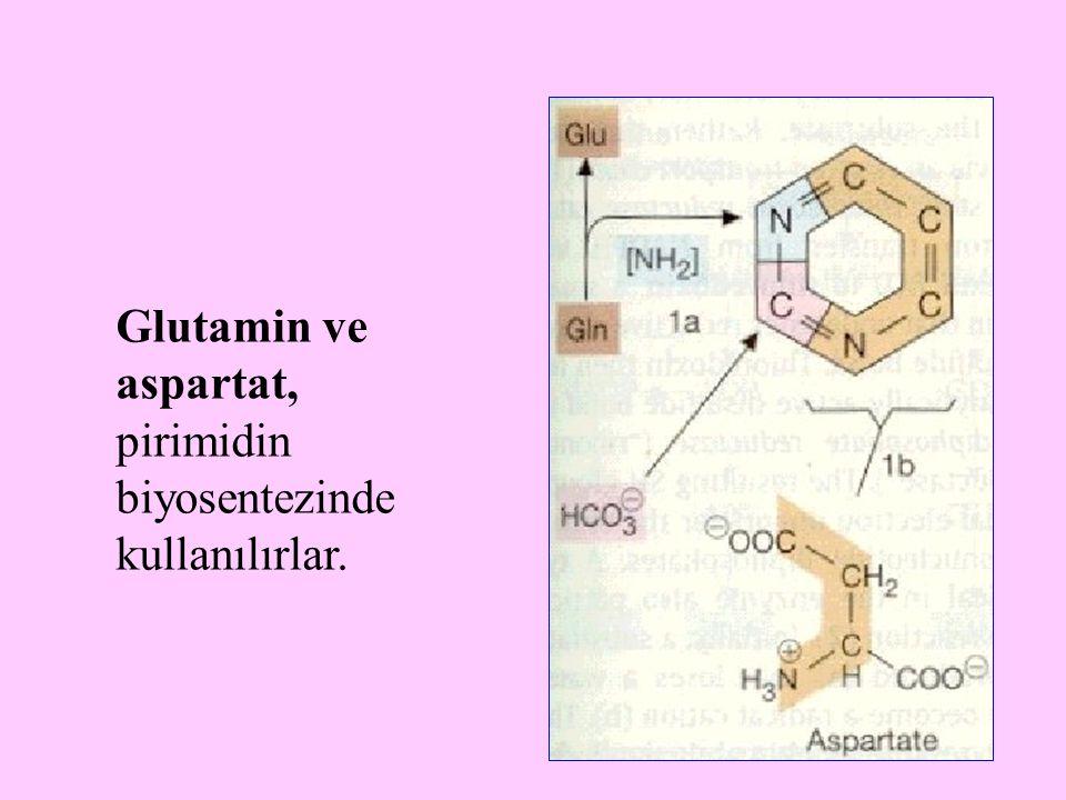 Glutamin ve aspartat, pirimidin biyosentezinde kullanılırlar.