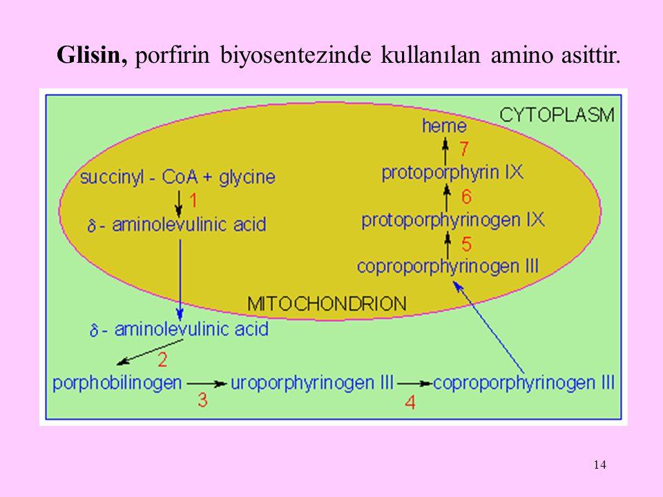 Glisin, porfirin biyosentezinde kullanılan amino asittir.