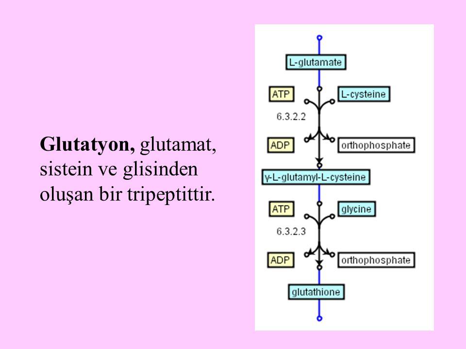 Glutatyon, glutamat, sistein ve glisinden oluşan bir tripeptittir.