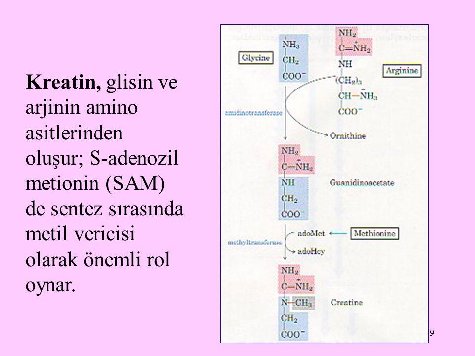 Kreatin, glisin ve arjinin amino asitlerinden oluşur; S-adenozil metionin (SAM) de sentez sırasında metil vericisi olarak önemli rol oynar.