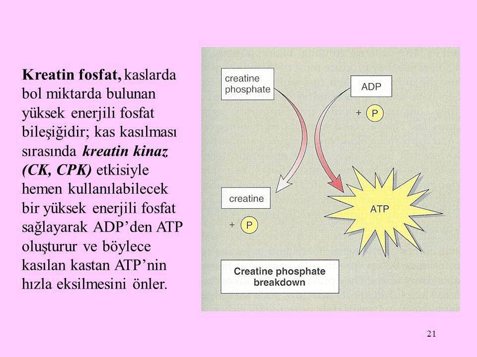 Kreatin fosfat, kaslarda bol miktarda bulunan yüksek enerjili fosfat bileşiğidir; kas kasılması sırasında kreatin kinaz (CK, CPK) etkisiyle hemen kullanılabilecek bir yüksek enerjili fosfat sağlayarak ADP'den ATP oluşturur ve böylece kasılan kastan ATP'nin hızla eksilmesini önler.