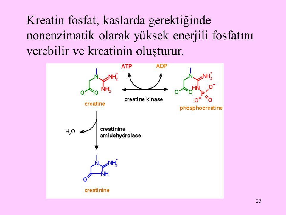 Kreatin fosfat, kaslarda gerektiğinde nonenzimatik olarak yüksek enerjili fosfatını verebilir ve kreatinin oluşturur.