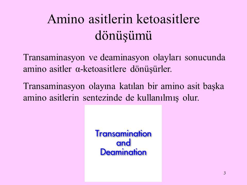 Amino asitlerin ketoasitlere dönüşümü