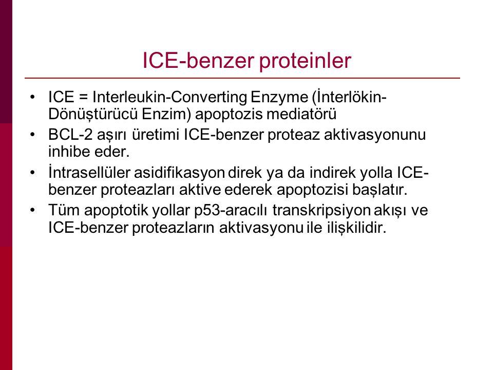 ICE-benzer proteinler