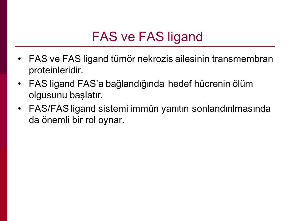 FAS ve FAS ligand FAS ve FAS ligand tümör nekrozis ailesinin transmembran proteinleridir.