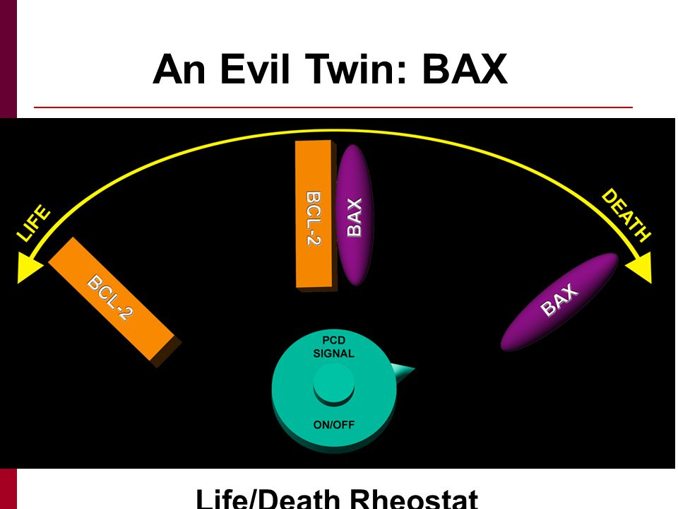 An Evil Twin: BAX Life/Death Rheostat