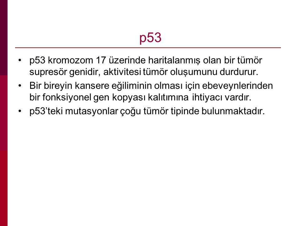 p53 p53 kromozom 17 üzerinde haritalanmış olan bir tümör supresör genidir, aktivitesi tümör oluşumunu durdurur.