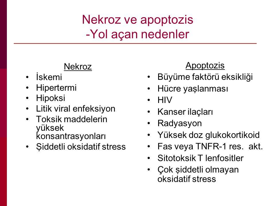 Nekroz ve apoptozis -Yol açan nedenler