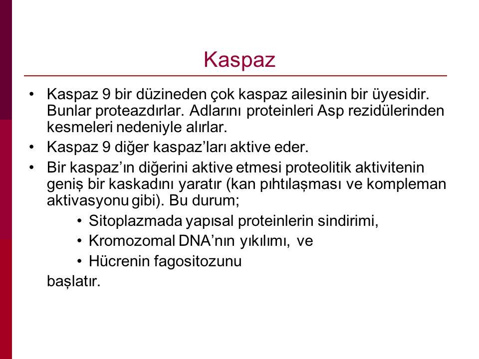 Kaspaz