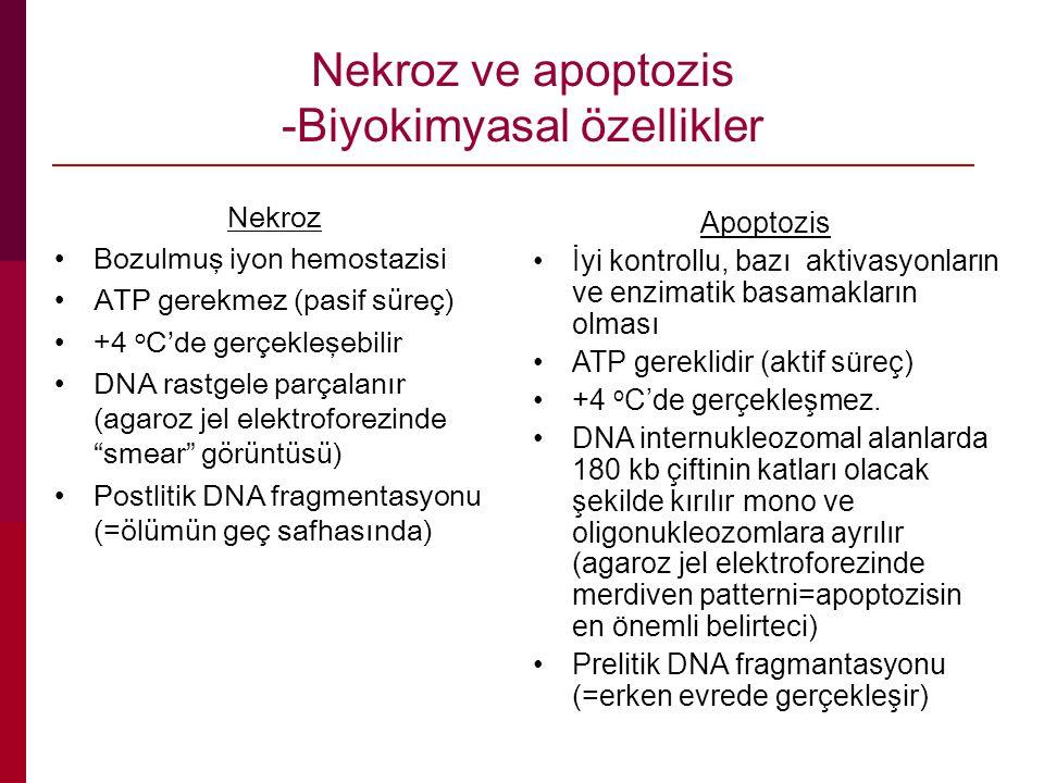 Nekroz ve apoptozis -Biyokimyasal özellikler