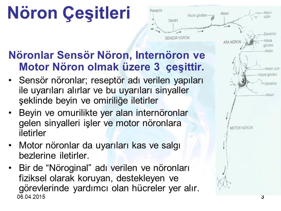 Nöron Çeşitleri Nöronlar Sensör Nöron, Internöron ve Motor Nöron olmak üzere 3 çeşittir.