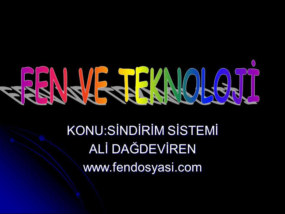 KONU:SİNDİRİM SİSTEMİ ALİ DAĞDEVİREN www.fendosyasi.com