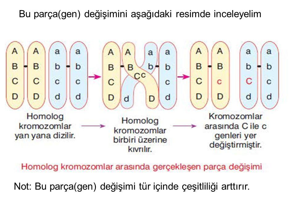 Bu parça(gen) değişimini aşağıdaki resimde inceleyelim