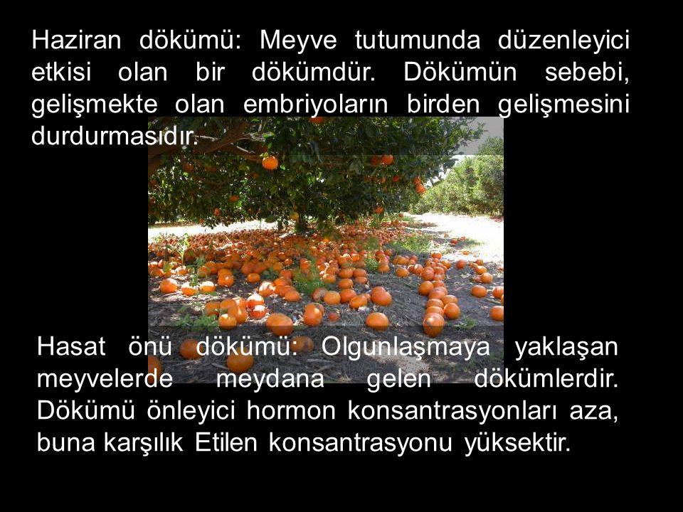 Haziran dökümü: Meyve tutumunda düzenleyici etkisi olan bir dökümdür