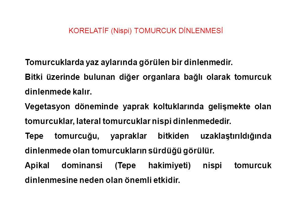 KORELATİF (Nispi) TOMURCUK DİNLENMESİ