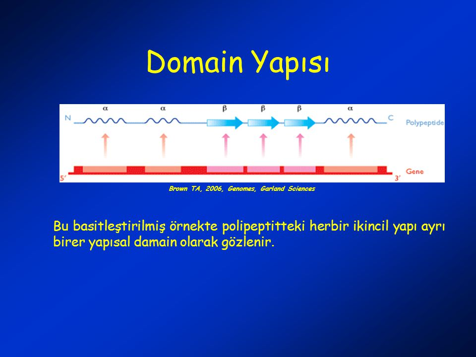 Domain Yapısı Brown TA, 2006, Genomes, Garland Sciences.
