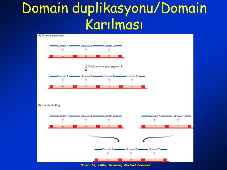 Domain duplikasyonu/Domain Karılması