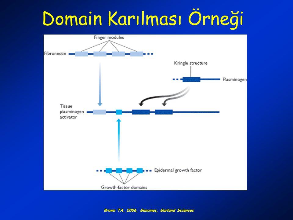 Domain Karılması Örneği