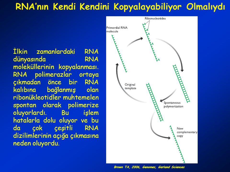 RNA'nın Kendi Kendini Kopyalayabiliyor Olmalıydı