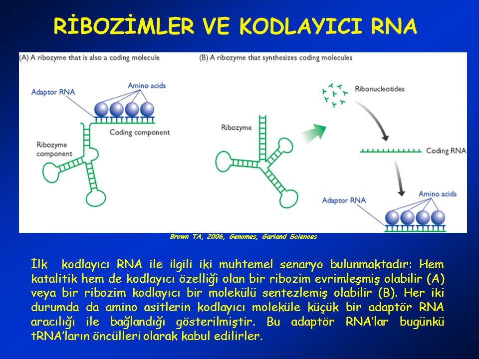 RİBOZİMLER VE KODLAYICI RNA