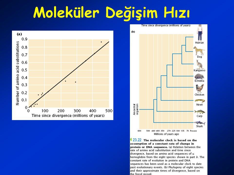 Moleküler Değişim Hızı
