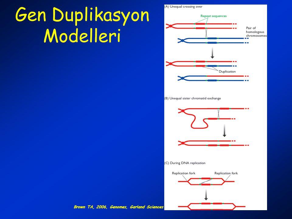 Gen Duplikasyon Modelleri