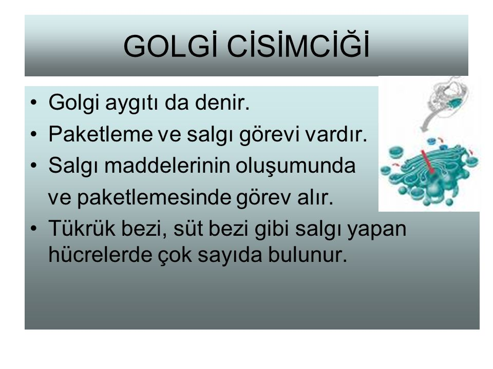 GOLGİ CİSİMCİĞİ Golgi aygıtı da denir.