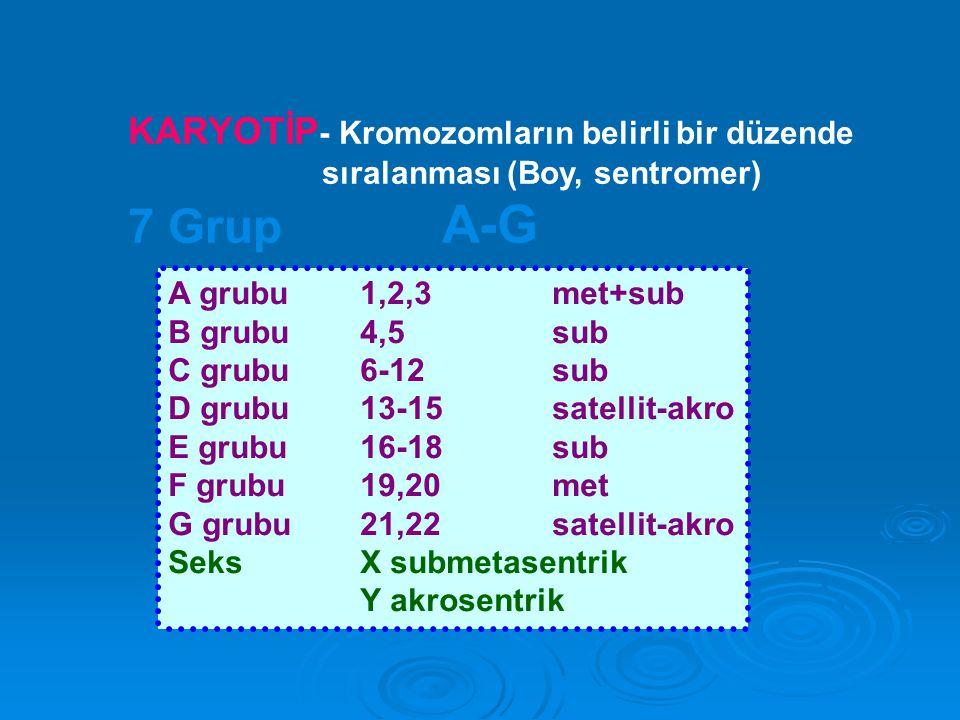 7 Grup A-G KARYOTİP- Kromozomların belirli bir düzende