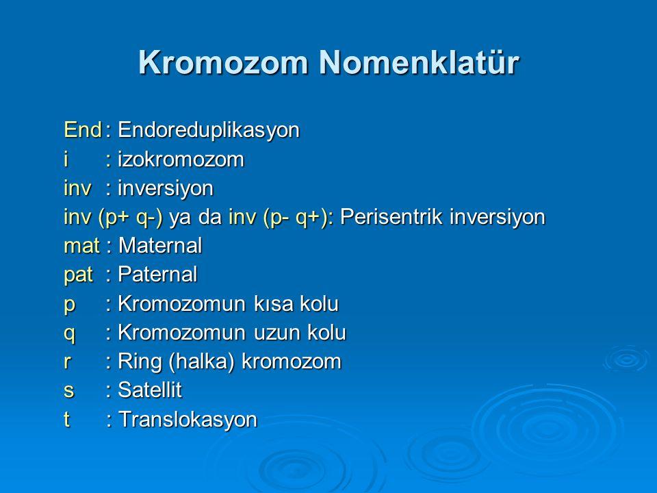 Kromozom Nomenklatür End : Endoreduplikasyon i : izokromozom