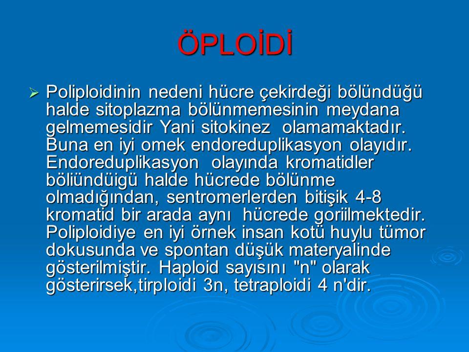 ÖPLOİDİ