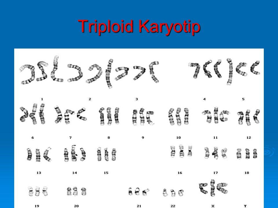 Triploid Karyotip