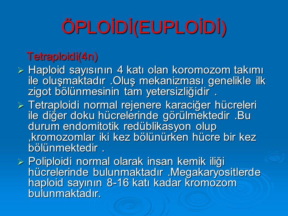 ÖPLOİDİ(EUPLOİDİ) Tetraploidi(4n)