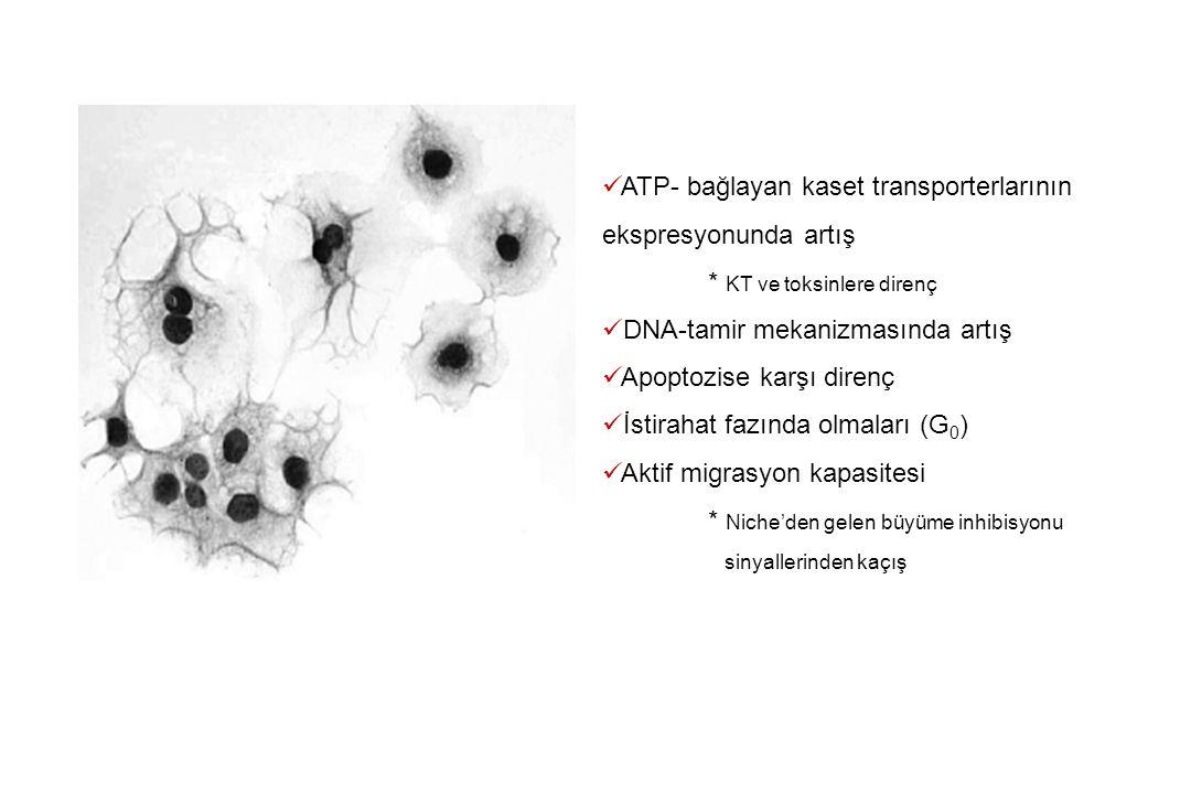 ATP- bağlayan kaset transporterlarının ekspresyonunda artış