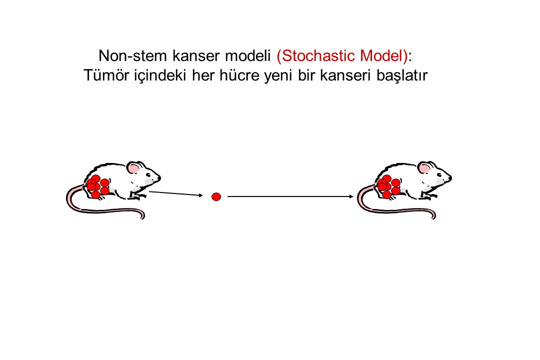 Non-stem kanser modeli (Stochastic Model):