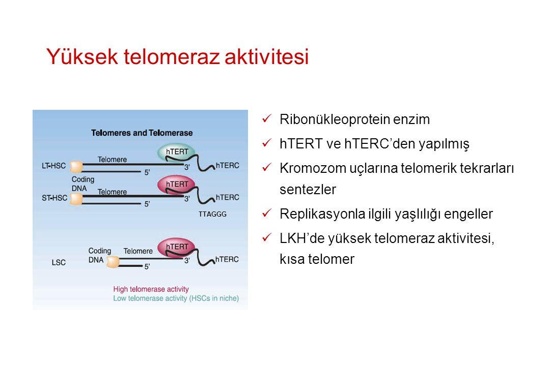 Yüksek telomeraz aktivitesi