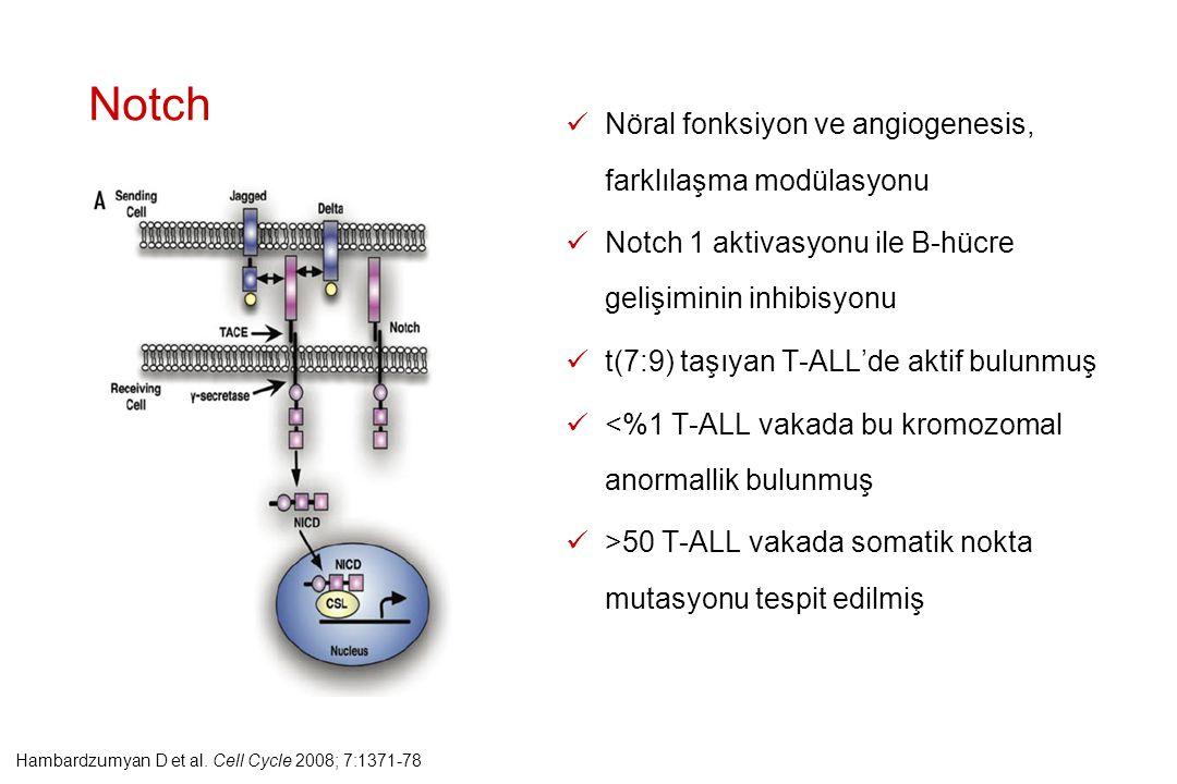 Notch Nöral fonksiyon ve angiogenesis, farklılaşma modülasyonu