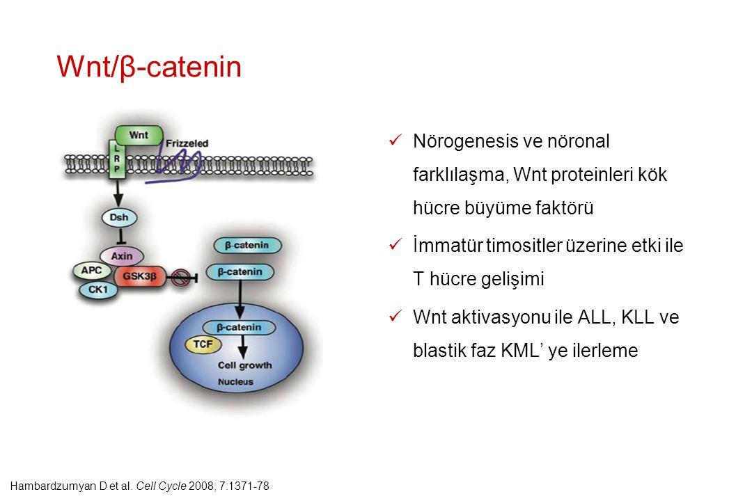 Wnt/β-catenin Nörogenesis ve nöronal farklılaşma, Wnt proteinleri kök hücre büyüme faktörü. İmmatür timositler üzerine etki ile T hücre gelişimi.