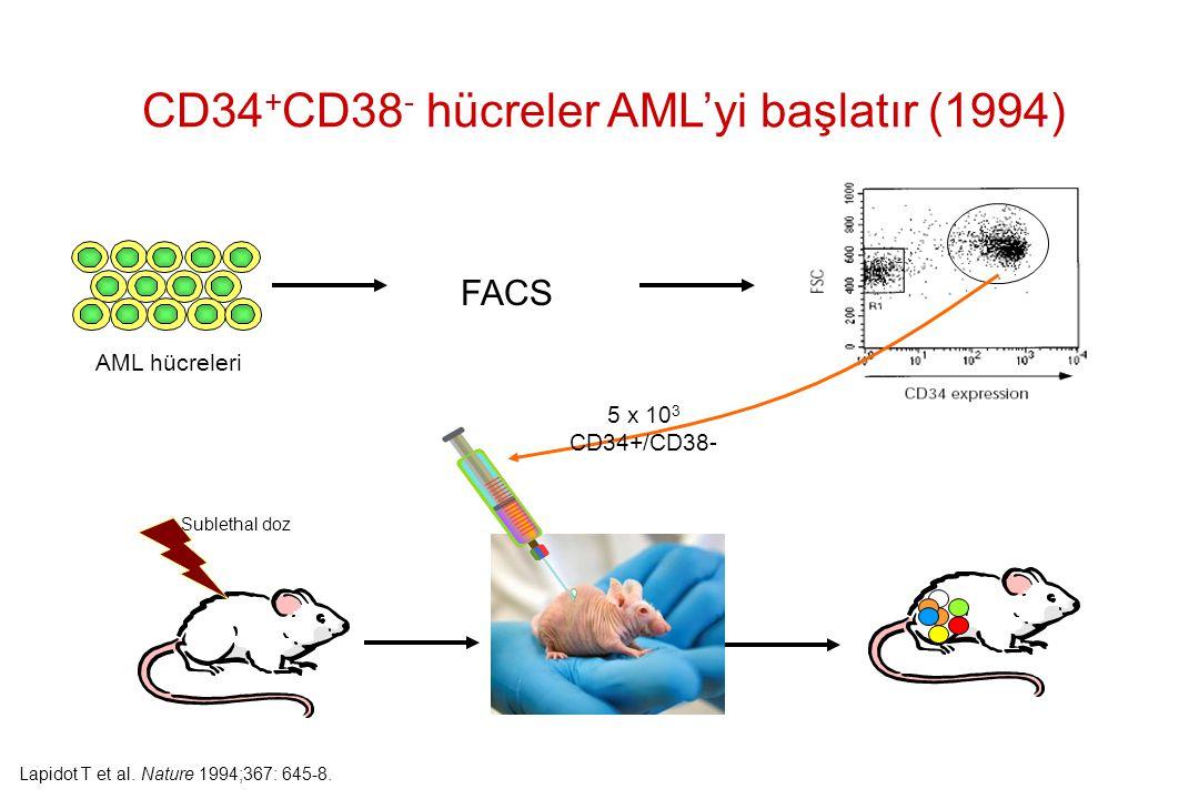 CD34+CD38- hücreler AML'yi başlatır (1994)