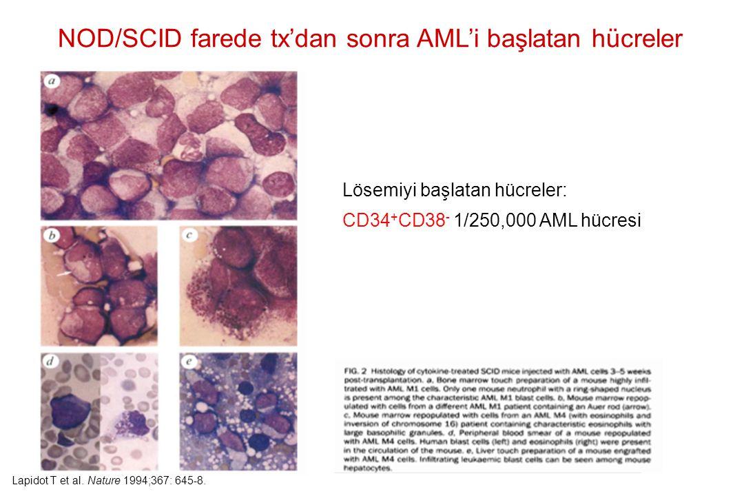 NOD/SCID farede tx'dan sonra AML'i başlatan hücreler