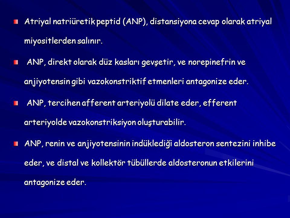 Atriyal natriüretik peptid (ANP), distansiyona cevap olarak atriyal miyositlerden salınır.