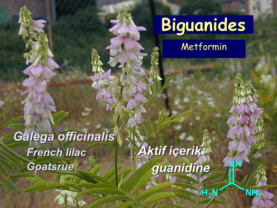 Biguanides Galega officinalis Aktif içerik: guanidine French lilac